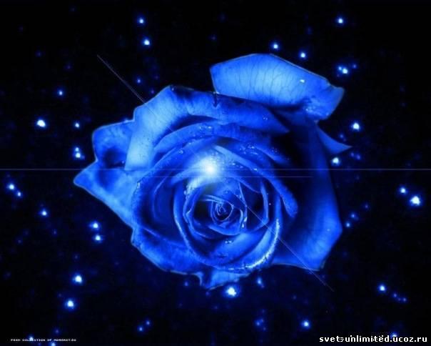 Голубая роза Сириуса - СВЕТ без границ: svet-unlimited.ucoz.ru/forum/31-299-1